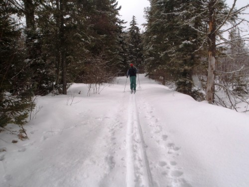 X-C Skiing on High Fall Trail